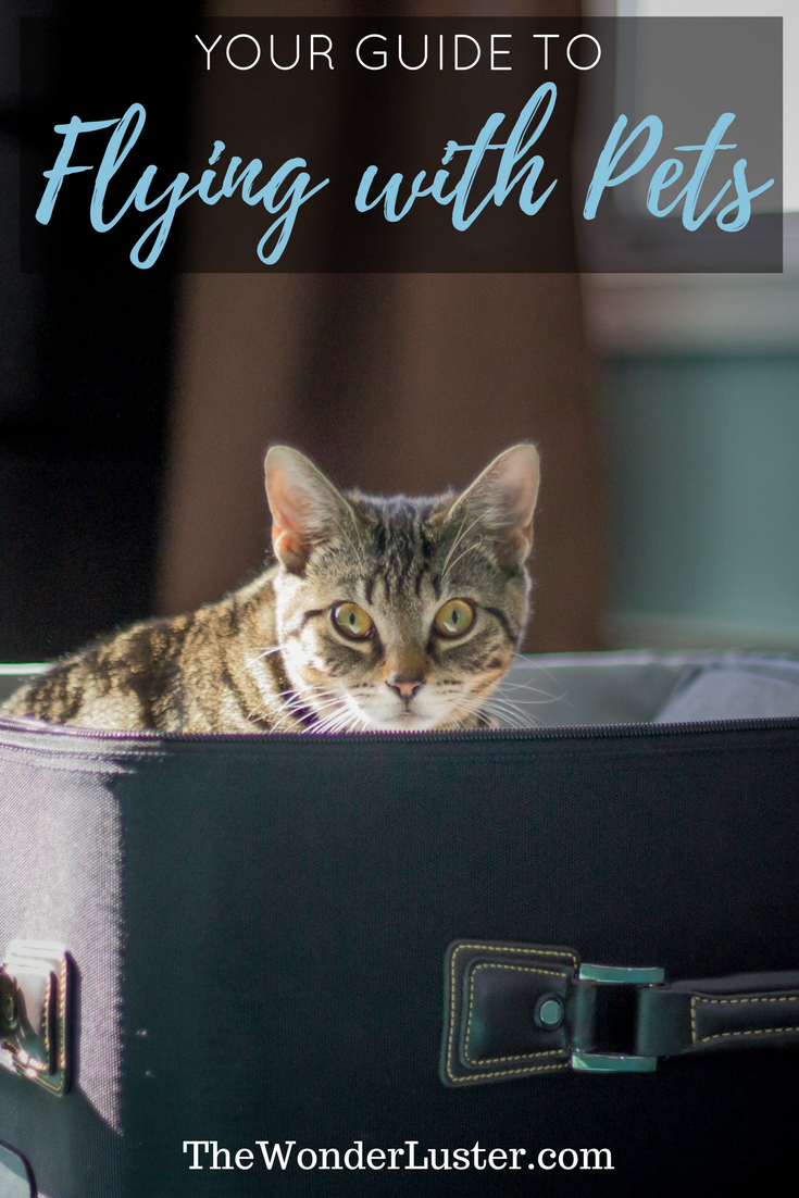Worried about airline travel with pets? There's a lot to learn before you take your trip with your furry companion. Here's my guide on how to fly with them.