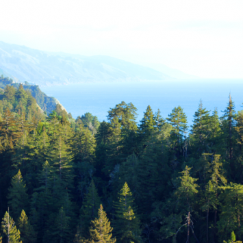 A Trip To Big Sur & Northern California